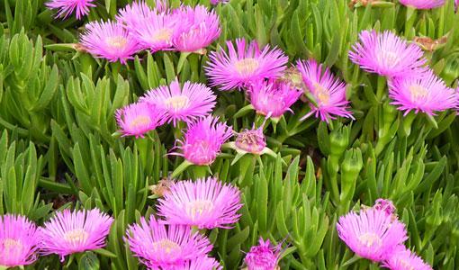 Griechenland: Reichhaltige Flora